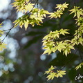 写真: 鎌倉-359