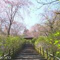 写真: 北鎌倉-382