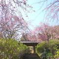写真: 北鎌倉-384