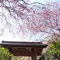 写真: 北鎌倉-386