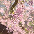 写真: 北鎌倉-397