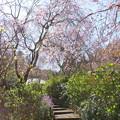 写真: 北鎌倉-401