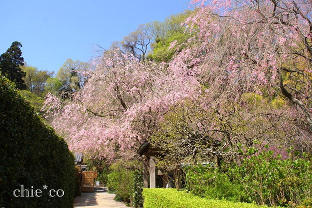 写真: 北鎌倉-403