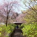 写真: 北鎌倉-406