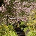 写真: 北鎌倉-408