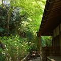写真: 北鎌倉-430