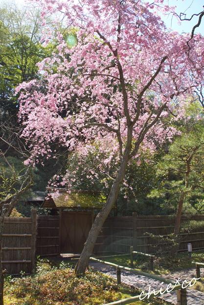写真: 北鎌倉-446