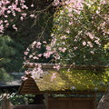 写真: 北鎌倉-448