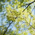 写真: 北鎌倉-455
