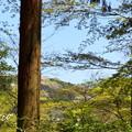 写真: 北鎌倉-459