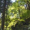 写真: 北鎌倉-471
