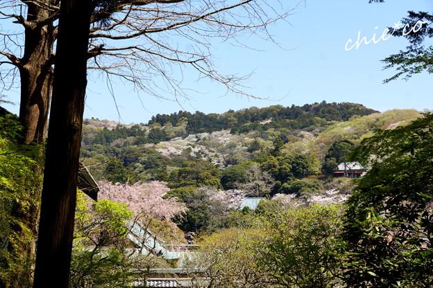 写真: 北鎌倉-473