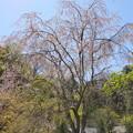 写真: 北鎌倉-477