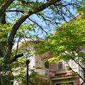 写真: 鎌倉-250