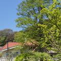 写真: 鎌倉-274