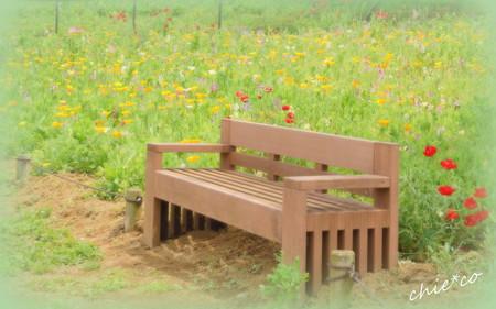 花菜ガーデン-203