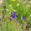 写真: 花菜ガーデン-220