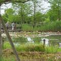 写真: 花菜ガーデン-237
