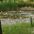 写真: 花菜ガーデン-238