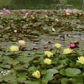 写真: 花菜ガーデン-240
