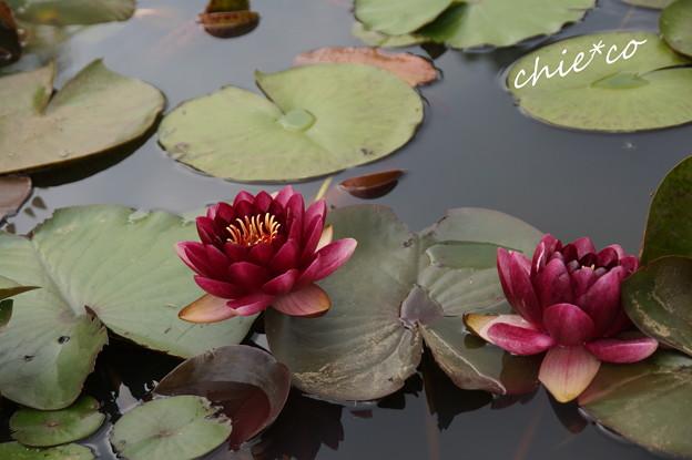 写真: 花菜ガーデン-244