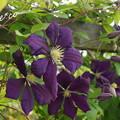 写真: 花菜ガーデン-246