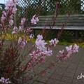 写真: 花菜ガーデン-249