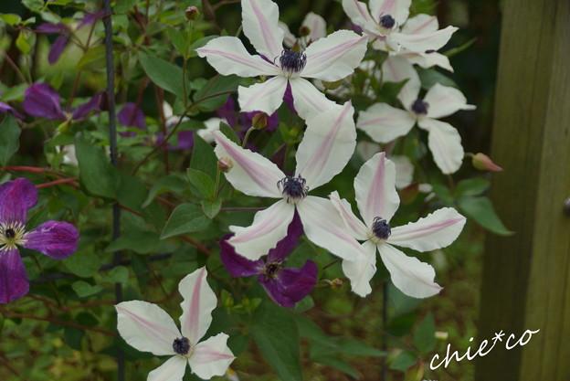 写真: 花菜ガーデン-253
