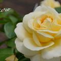 写真: 花菜ガーデン-256