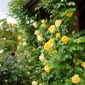 写真: 花菜ガーデン-257