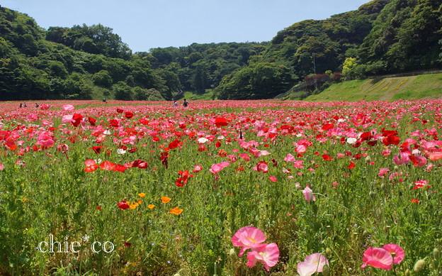 写真: くりはま花の国-275