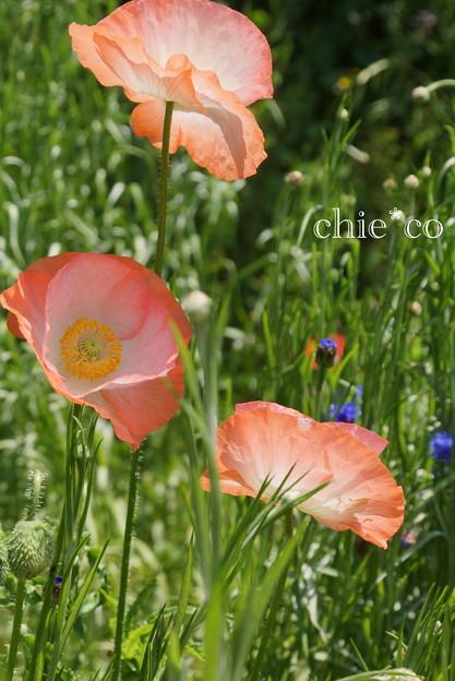 くりはま花の国-278