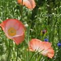 写真: くりはま花の国-278