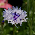 写真: くりはま花の国-279