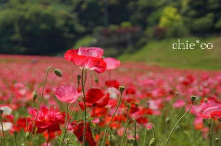 くりはま花の国-280