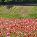 写真: くりはま花の国-281