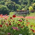 写真: くりはま花の国-285