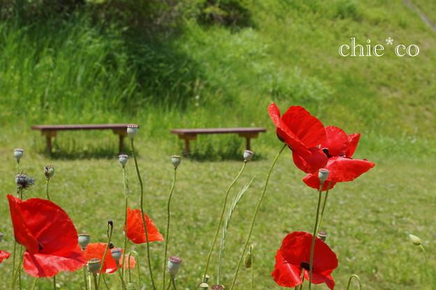 写真: くりはま花の国-290