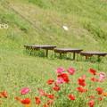 写真: くりはま花の国-293