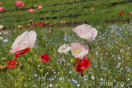 くりはま花の国-300