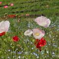 写真: くりはま花の国-300