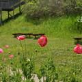 写真: くりはま花の国-306