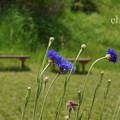写真: くりはま花の国-307