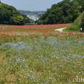 写真: くりはま花の国-312