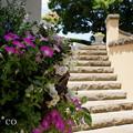 写真: イタリア山庭園-163