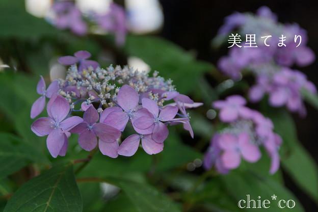 写真: 瀬戸神社~山あじさい-379