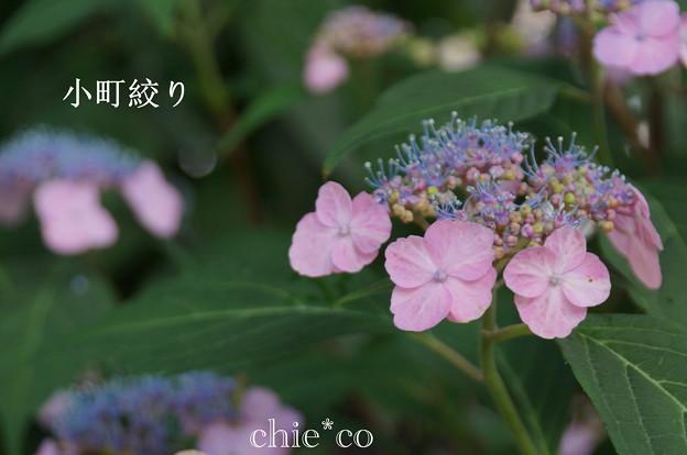 写真: 瀬戸神社~山あじさい-380