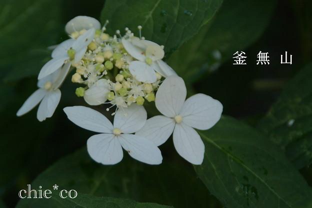 写真: 瀬戸神社~山あじさい-382