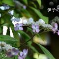 写真: 瀬戸神社~山あじさい-393