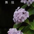 写真: 瀬戸神社~山あじさい-404